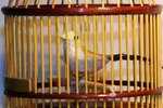 Vogelkäfig mit mechanischer Spieluhr, macht Vogelgezwitscher
